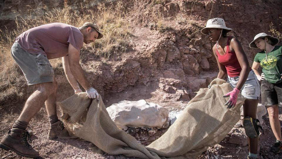 """It's phenomenal, it's really great,"" said palaeontology masters candidate Cebisa Mdekazi (2nd, R). ""It also instills pride for your country... Every time we go out into the field and we dig something up, there's a pretty good chance that it might be something new,"" Mdekazi said. ""It's dinosaur country, and there's no way we'll ever finish the work in my lifetime."" (Gianluigi Guercia / AFP)"