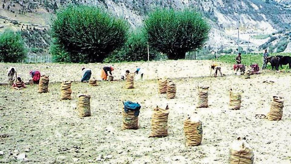 The Centre had issued a notification prohibiting the movement of seed potatoes from Uttarakhand, Himachal Pradesh, Jammu and Kashmir and Tamil Nadu to other states on October 12.