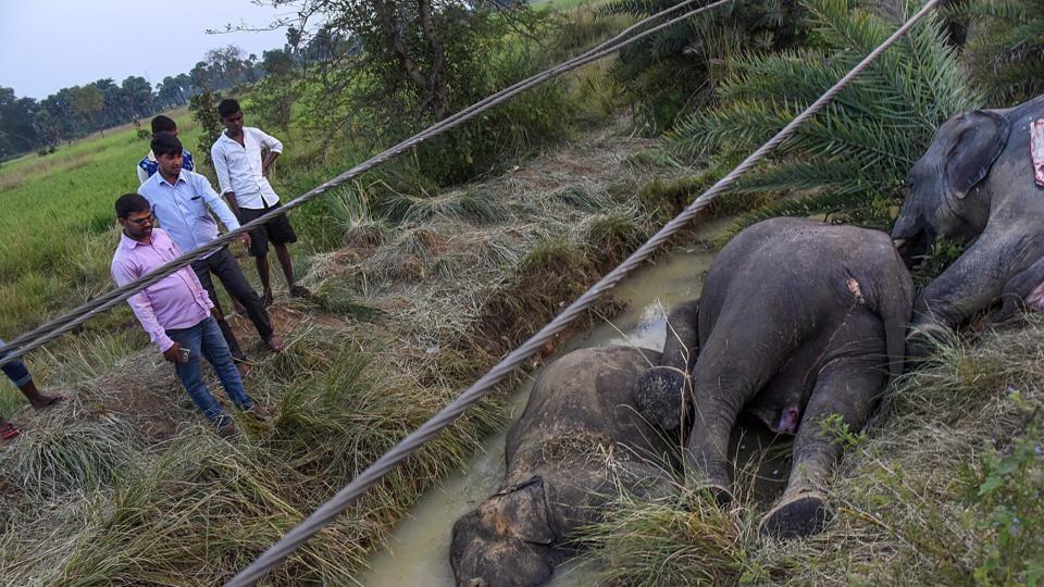 Naveen Patnaik,probe,elephants