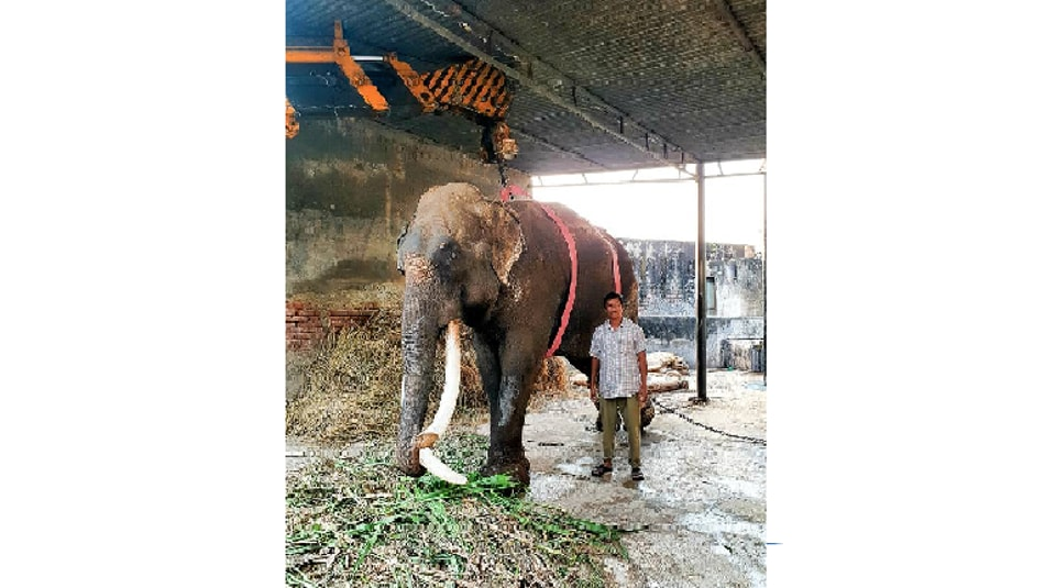 Elephant Raj Mangal was brought to the zoo in 1997.