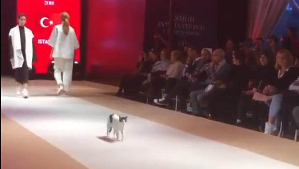 Cat,Cats of Twitter,Cats of Instagram