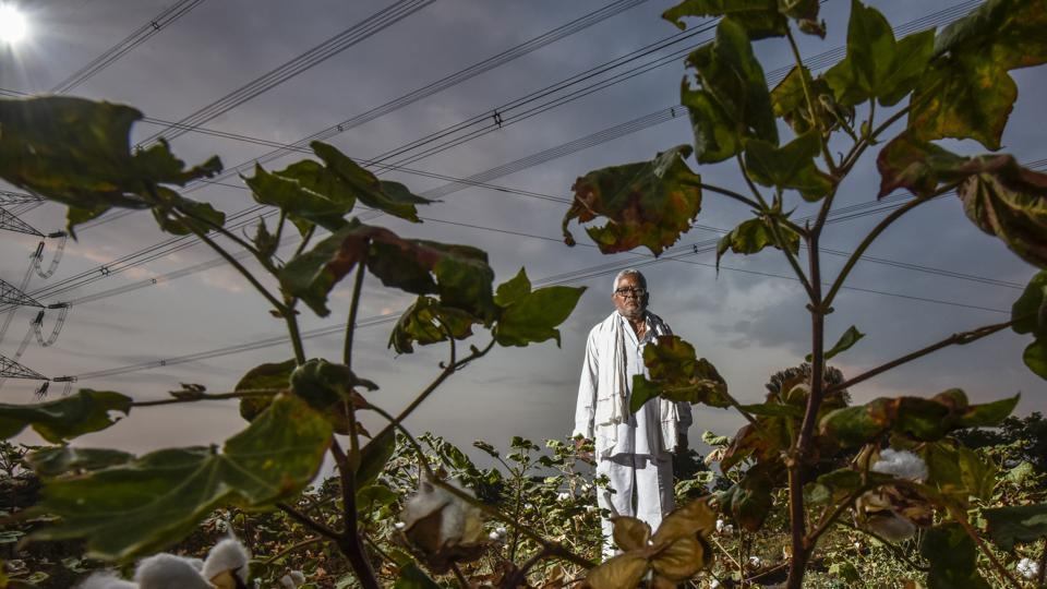 Ganesh Nevde, a former sarpanch of Kamkheda village in Beed district, says he suffered losses of ₹6,000 for every acre of his 12-acre cotton fields as rains failed this year. He has no money to sow the crop next season. Officially, the monsoon in Maharashtra ended on September 30. However, in Beed, Mangal Waghmare, a farm labourer said it's like it skipped a season bar a brief spell in July. (Kunal Patil / HT Photo)