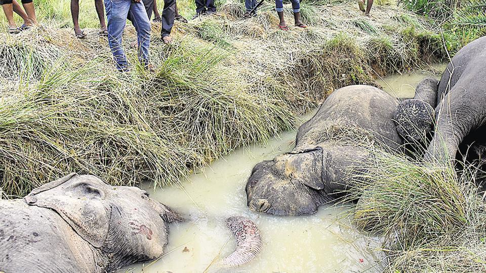 Seven elephants died of electrocution in Dhenkanal district, Odisha, October. 27, 2018. The World Wildlife Fund (WWF) Living Planet Report 2018, a science-based assessment of the health of the planet, says that global wildlife populations have fallen by 60% in just over four decades, thanks to accelerating pollution, deforestation, climate change, and other man-made factors