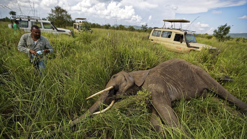 wildlife,wildlife population,WWF
