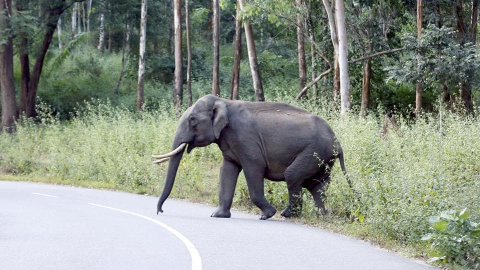 The Uttarakhand forest department has now decided not to allow the vehicles, especially trucks laden with food items, stop on the road stretch in Ramnagar area near the Corbett Tiger Reserve.