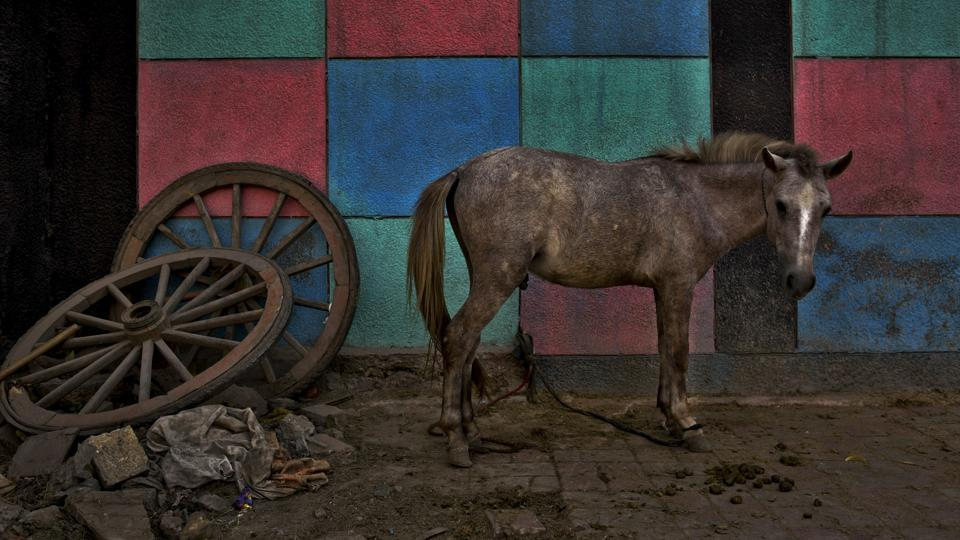 A mule stands next to colour patterns painted on a school wall as the wheels of an old cart lie nearby in New Delhi on October 28, 2018. (R S Iyer / AP)