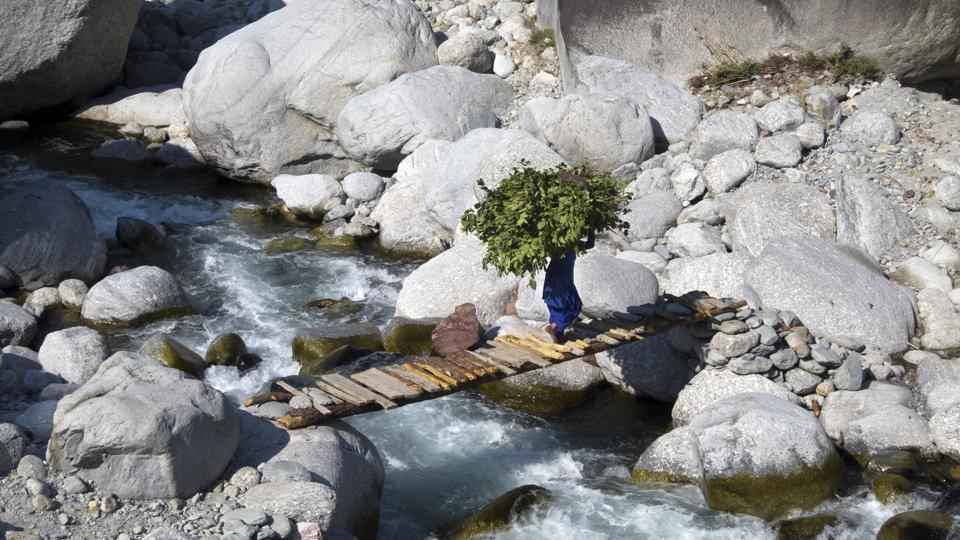 A woman crosses a wooden bridge across a stream while carrying a large bundle of leaves collected from the woods to be used as fodder, near Ghera village in Dharmsala, Himachal Pradesh on October 30, 2018. (Ashwini Bhatia / AP)