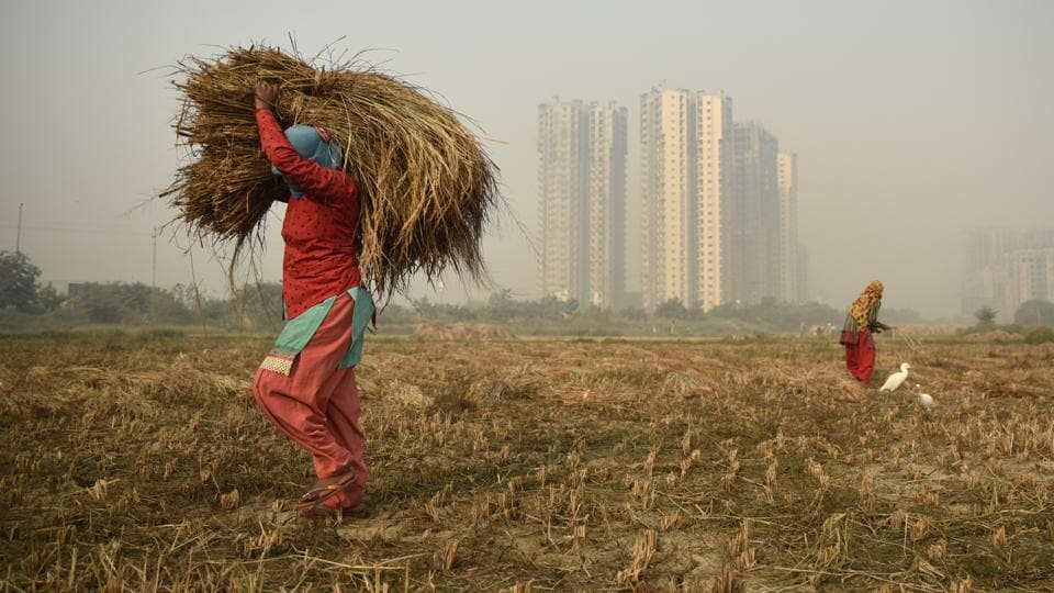 An under-construction high-rise residential building is seen in the background as farm workers harvest paddy crop in Greater Noida, Uttar Pradesh on October 29, 2018. (R S Iyer / AP)