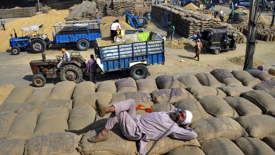 A farmer takes a nap awaiting procurement of his produce at the new grain market in Patiala, Punjab on October 29, 2018. (PTI)