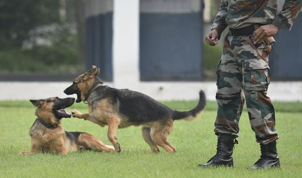 Soldiers At Rest A Peek Into The Cushy Lives Of Retired Army Dogs