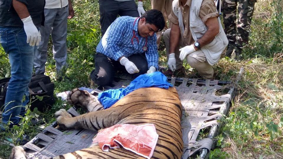 Tigers in India,Tiger conservation,Tiger reservation