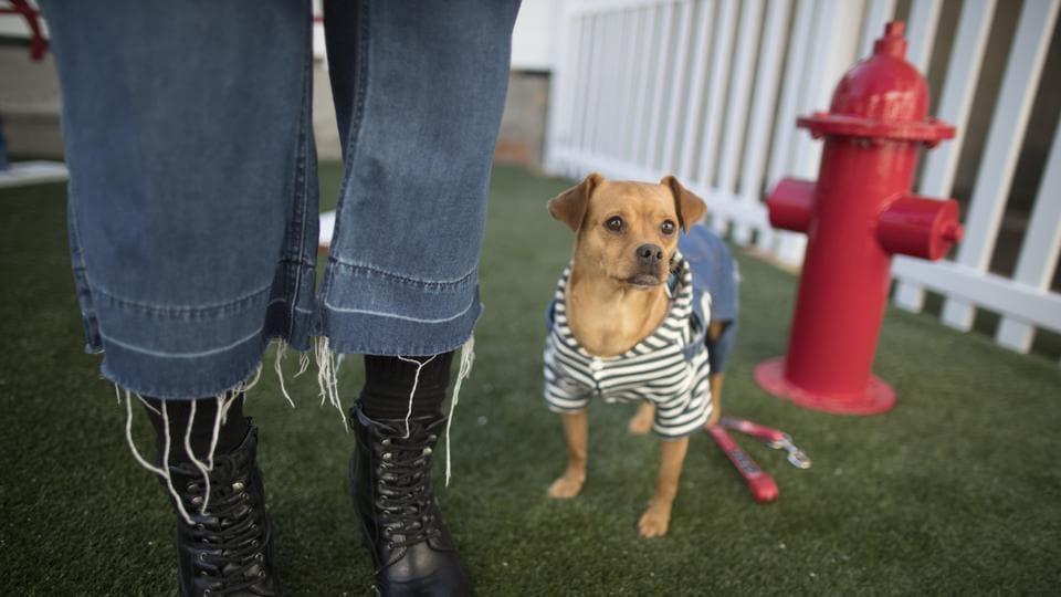 pet owners,diwali,crackers