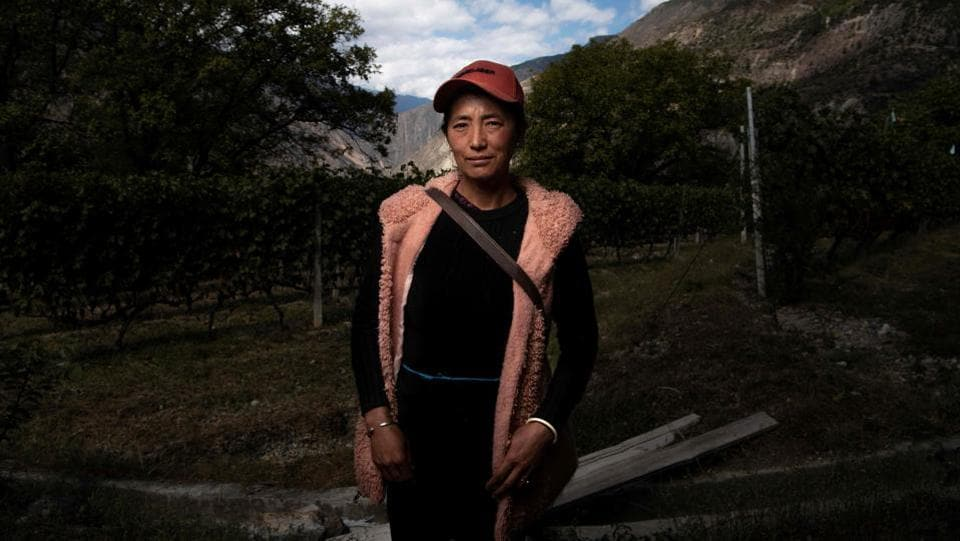 A farmer poses during the harvest at the Ao Yun vineyards. These vineyards are situated in the middle of the Mekong, Yangtze and Salween rivers, a unique location which boasts moderate temperatures all year round so the vines do not need to be buried to prevent them from freezing in the winter. (Fred Dufour / AFP)