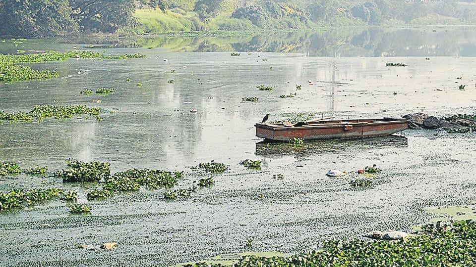 An inch of oil slick found floating on Mula river near Rajiv Gandhi bridge at Aundh in Pune