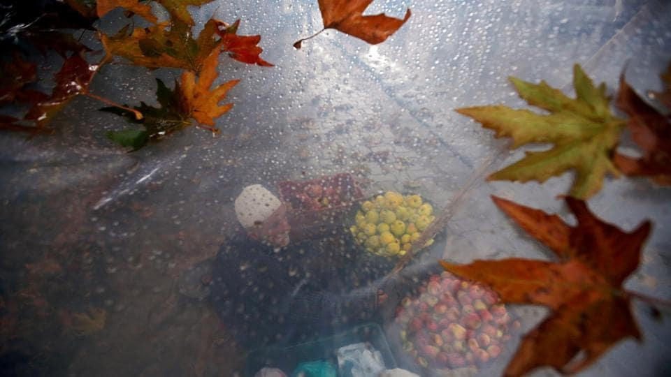 A roadside vendor selling apples is seen through a plastic sheet that he uses to cover himself from rain, in Srinagar, Jammu and Kashmir. (Danish Ismail / REUTERS)