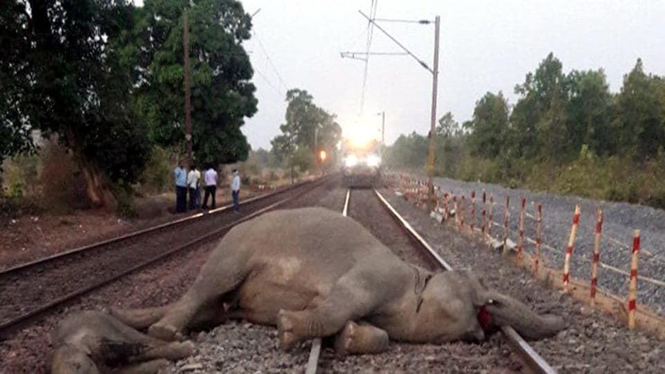 elephant,train,Assam