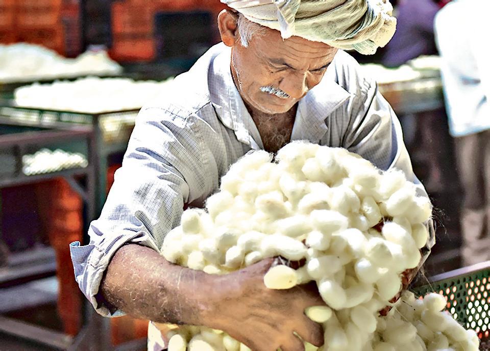 Karnataka,silk,cocoon