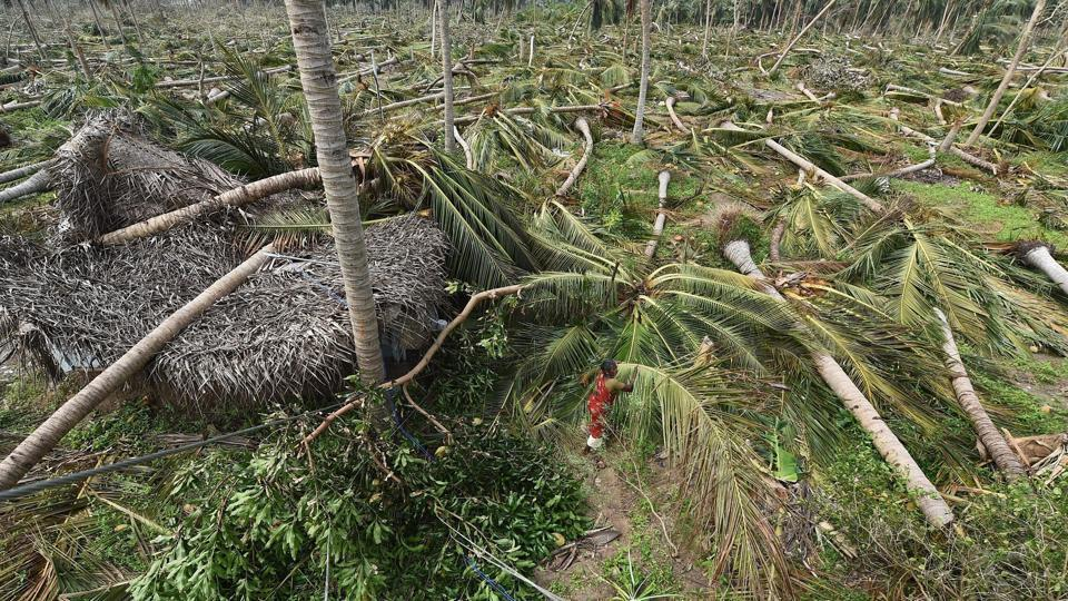 A 58-year-old farmer committed suicide after Cyclone Gaja uprooted hundreds of coconut trees in his farm in Tamil Nadu's Thanjavur district, police have said, as farm leaders blamed the state government for offering a paltry compensation of Rs 1,700 against the loss. Police said Sundar Raj from the district's Sozhagankudikadu village allegedly consumed pesticide. (PTI File)