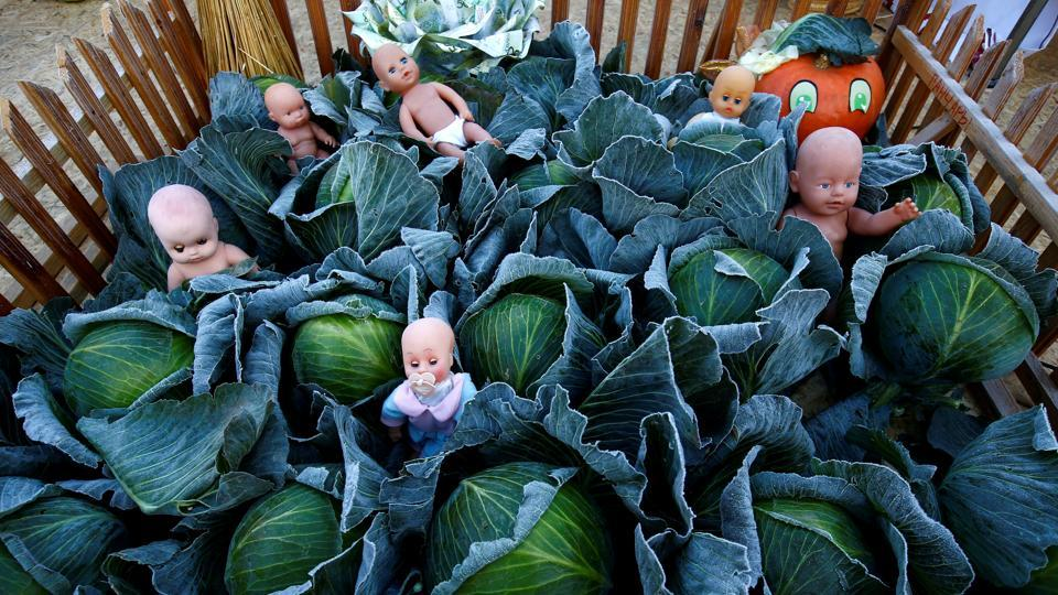 An installation of cabbage and baby dolls is seen during the annual harvest festival 'Dazhynki - 2018' in the town of Ivie, Belarus. (Vasily Fedosenko / REUTERS)