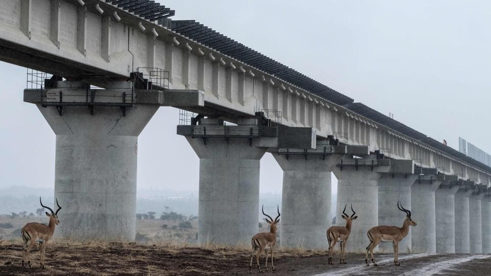 Impalas walk near the elevated railway that allows movement of animals below the tracks at the construction site of Standard Gauge Railway (SGR) in Nairobi National Park, Kenya. (Yasuyoshi Chiba / AFP)