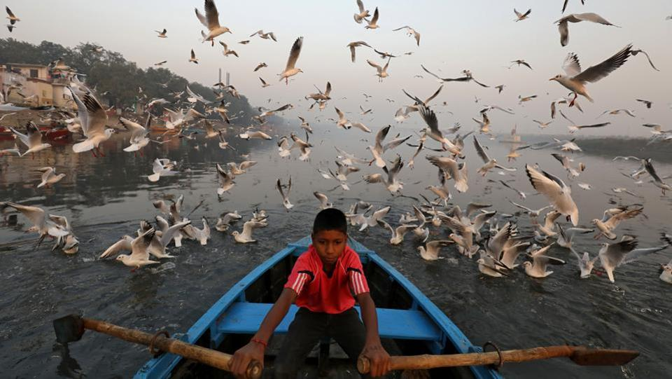 A boy rides a boat as seagulls fly over the waters of the river Yamuna early morning in New Delhi on November 21, 2018. (Anushree Fadnavis  / REUTERS)