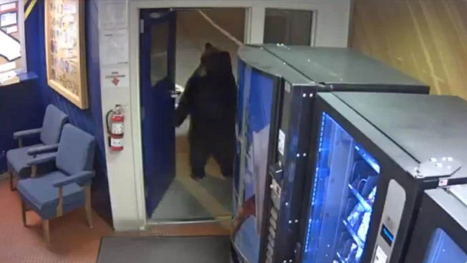 bear,viral video,California