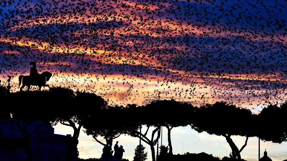 A swarm of starlings flies over the Altare della Patria monument (Unknown soldier) in the city centre of Rome during sunset, in Italy. (Vincenzo Pinto / AFP)