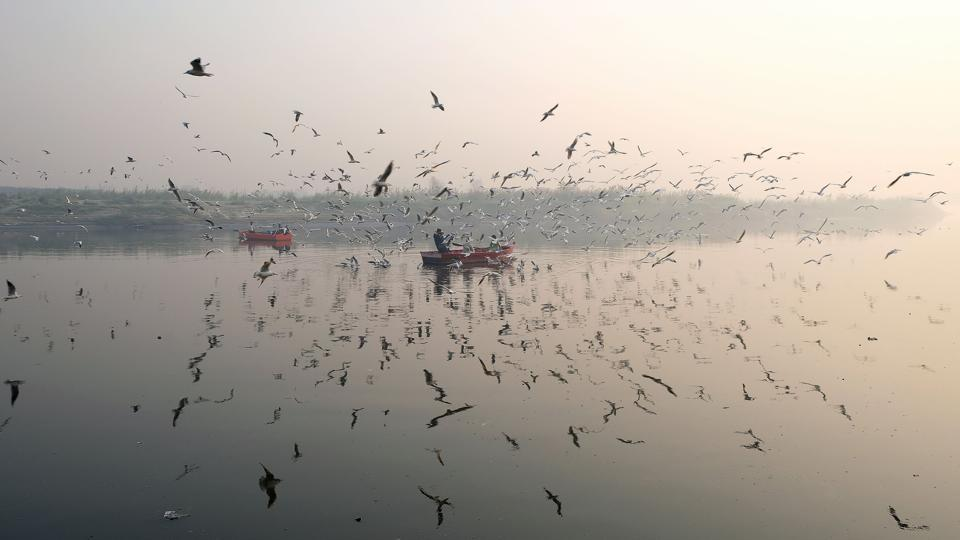 Migratory birds fly around row boats on the Yamuna River on a morning of heavy air pollution in New Delhi on November 27, 2018. (Noemi Cassanelli / AFP)
