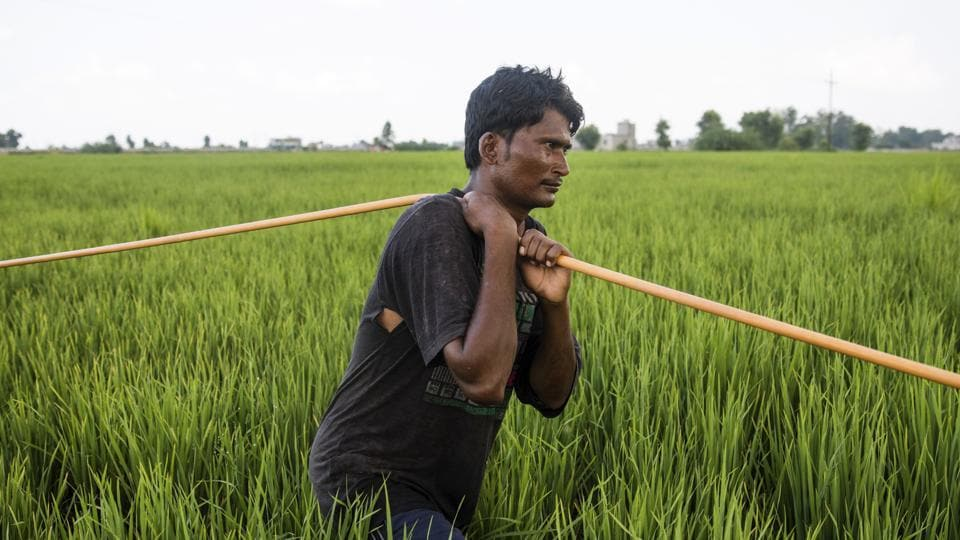 Nashik,farmer,Maharashtra