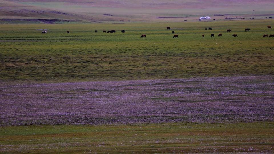 Mongolia,Orkhon Valley,Ulaanbaatar
