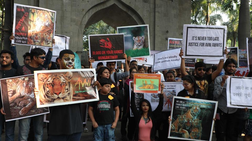People protest in Pune against the killing of  tigress  Avni.