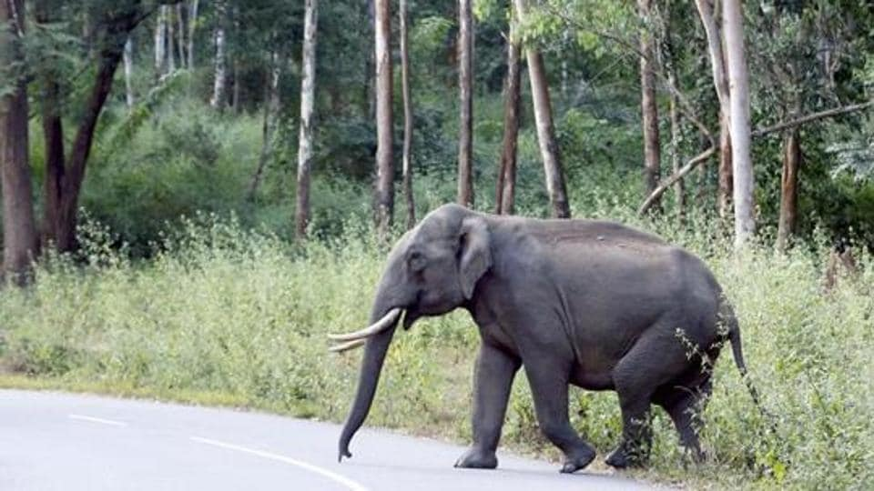 man trampled to death,man killed by elephants,man killed in jharkhand