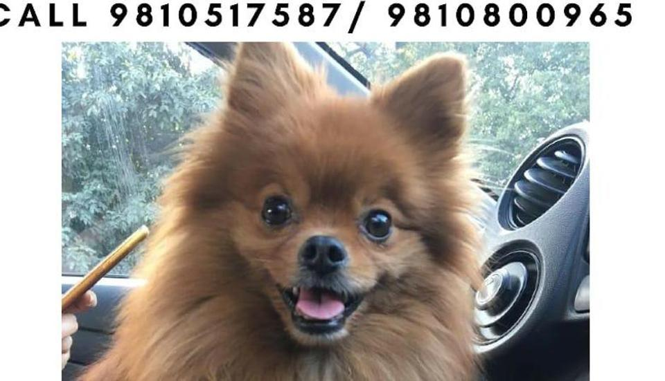 Police have checked the CCTV footage from nearby stores and have spotted two suspects in the case of a stolen Pomeranian dog from a car in Delhi's Aya Nagar.