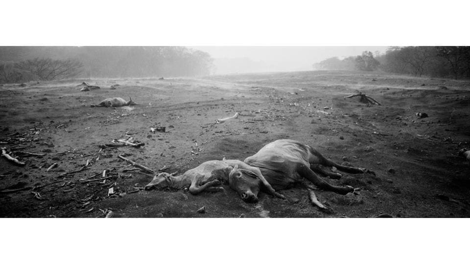 Animal carcasses lie entwined as steam rises on the horizon. The questions that presented themselves: How to document the tragedy — of lives and a landscape obliterated — on a piece of 35mm film? Abd decided that the panoramic format was necessary to tell this story of annihilation. Black and white film would best show ash-encased villages such as San Miguel Los Lotes. (Rodrigo Abd / AP)