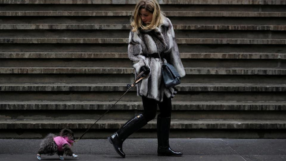 A woman walks her dog on Wall St. during a cold day in New York City. (Brendan McDermid / REUTERS)