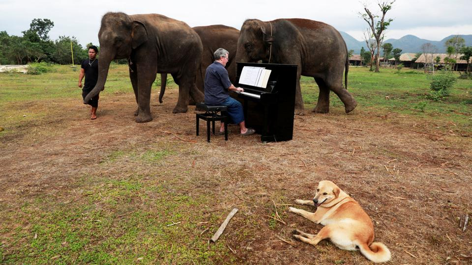 Paul Barton plays piano for sick, abused, retired and rescued elephants in a sanctuary in Kanchanaburi province, Thailand. Lam Duan, a 65-year-old, blind Thai elephant was enjoying her lunch, listening to Silent Night being played on a piano. (Soe Zeya Tun / REUTERS)