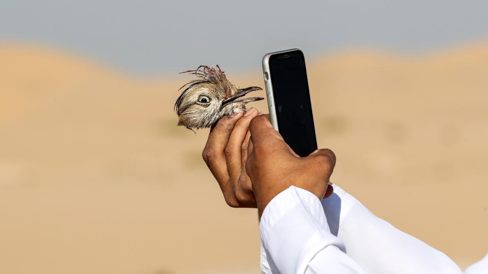 An Emirati falconer uses a cell phone to take a picture of the head of a Houbara bustard which was caught by a falcon on a hunting trip by Al-Marzoom Hunting Association at Al-Marzoom Falconry Reserve, about 100 kilometres southwest of Abu Dhabi. (Karim Sahib / AFP)