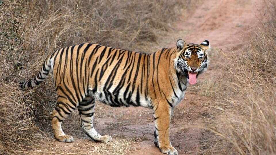 Rajasthan is yet declare an eco-sensitive zone for Sariska tiger reserve.