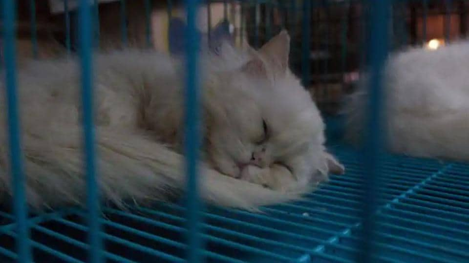 Uk Bans Pet Shops From Selling Puppies And Kittens World News