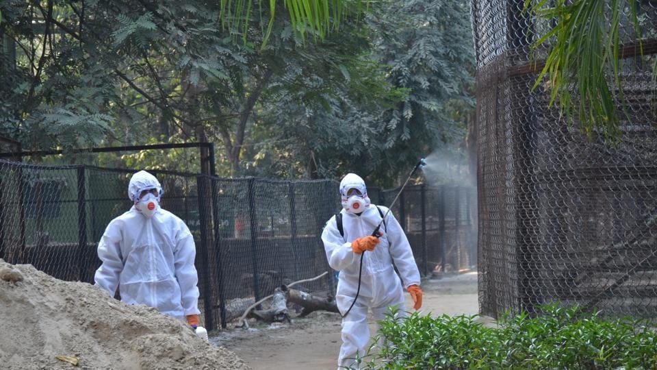 patna zoo,bird flu,peacocks die in zoo