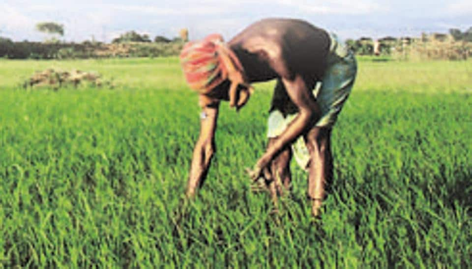 agricultural crops in india