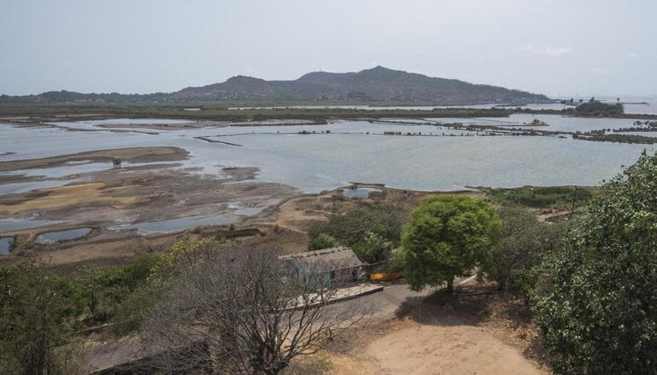 Mangroves,Environment,Mangrove destruction