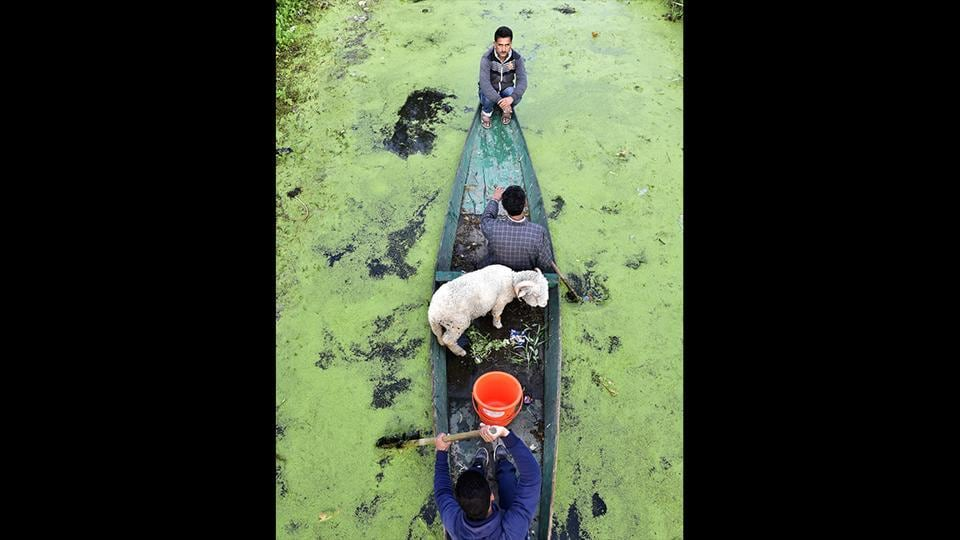 People row their boat in the floating vegetable market of Srinagar, Jammu and Kashmir. (Ajay Aggarwal / HT Photo)