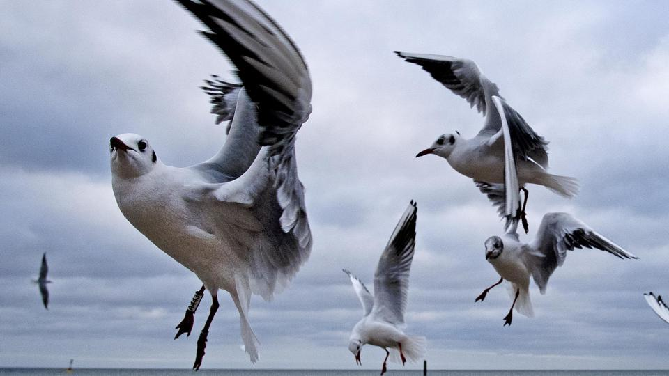 Sea gulls fly at the beach of the Baltic Sea in Timmendorfer Strand, Germany. (Michael Probst / AP)