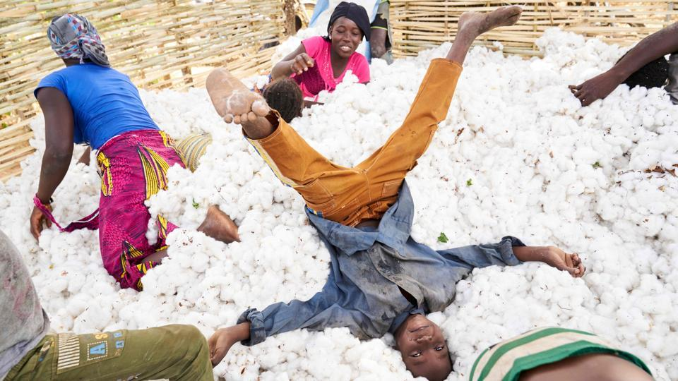 Malian children have fun in a pile of cotton during the harvest in southern Mali. (Michele Cattani / AFP)