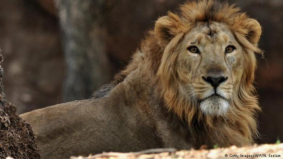 A lion killed a young worker at a wildlife conservatory Sunday after it got loose from a locked space, the center said.