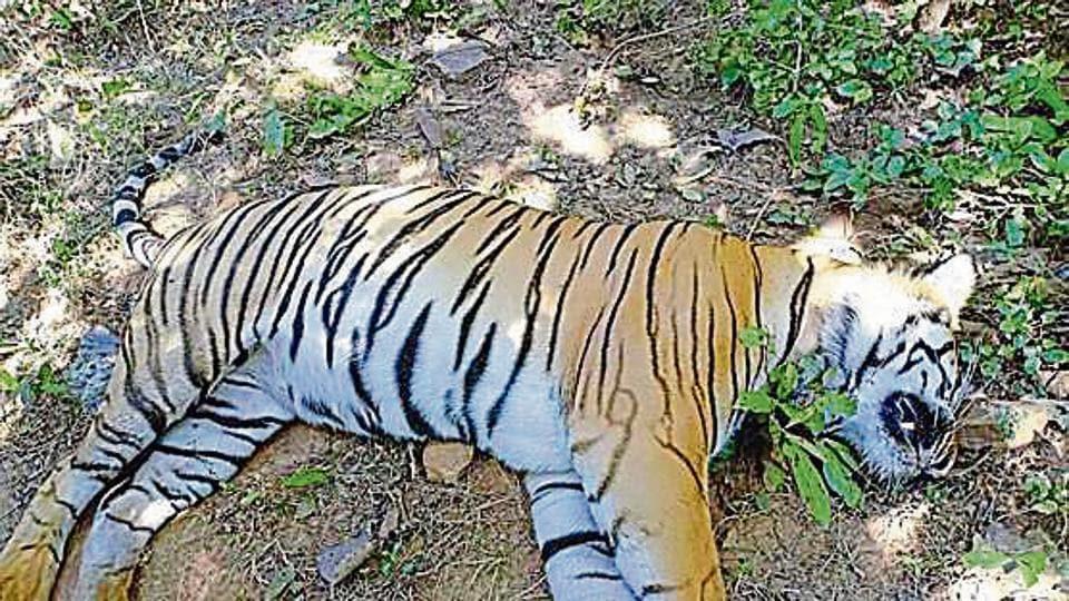 Mumbai Maharashtra Tiger Itb2cstore