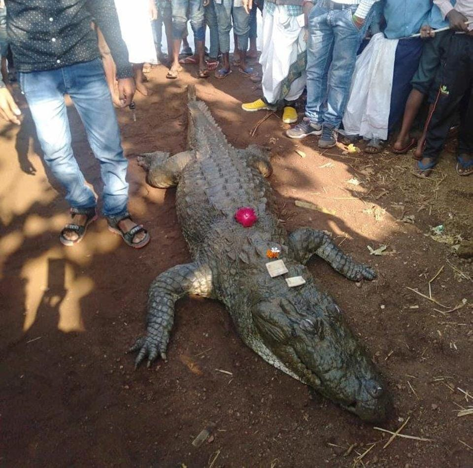 a076fa1be294 500 people attend last rites of beloved 130-years-old crocodile in ...
