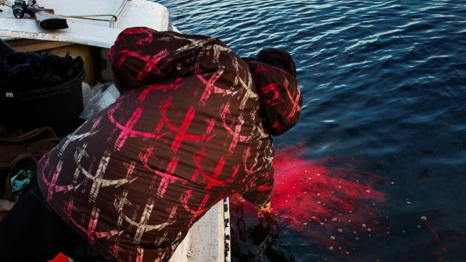Henrik Josvasson reaches down to hook a seal he has just shot while hunting near Tasiilaq. In addition, fish such as mackerel, usually not found in the icy seawater of Greenland, are now abundant - a boon for the local fishing industry, Moeller and Nielsen said. (Lucas Jackson / REUTERS)