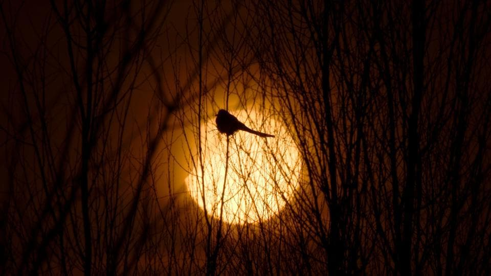 A partial solar eclipse is seen through a silhouette of a bird sitting on tree branches in Yinchuan, Ningxia Hui Autonomous Region, China. (Stringer / REUTERS)